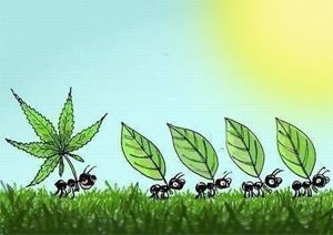 ds-Briain-legalize
