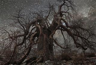 TNELM-trees