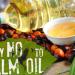 finban-opyt-palm_oil